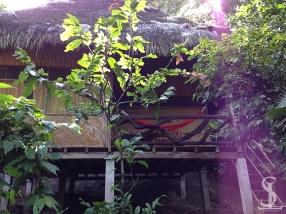 Amazon Rainforest - Liana Lodge