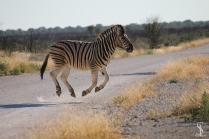 ST Zebra_WEB